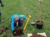 Beaver Tree Planting